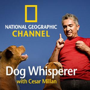 Cesar-Millan-the-dog-whisperer-25204452-300-300